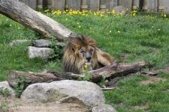 Zoo_Schwerin_100513_IMG_1510