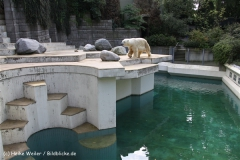 Zoo Wuppertal 040910 - IMG_1336