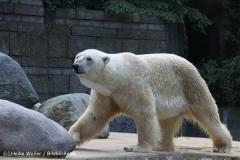 Zoo Wuppertal 040910 - IMG_1342