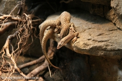 Zoo Wuppertal 040910 - IMG_1442