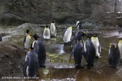 Zoo Wuppertal 040910 - IMG_1463-2
