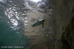Zoo Wuppertal 040910 - IMG_1500