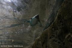 Zoo Wuppertal 040910 - IMG_1502
