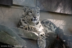 Zoo Wuppertal 040910 - IMG_1669
