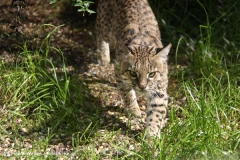 Zoo Wuppertal 040910 - IMG_1709