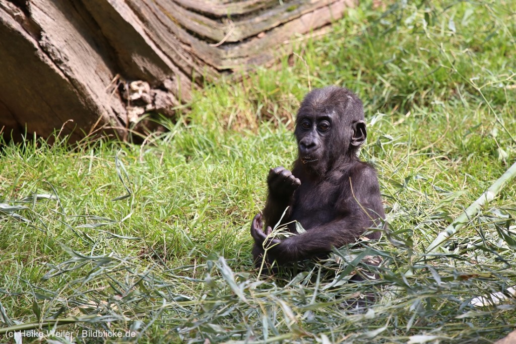 Zoo_Hannover_090916_IMG_8151-1024x683.jpg