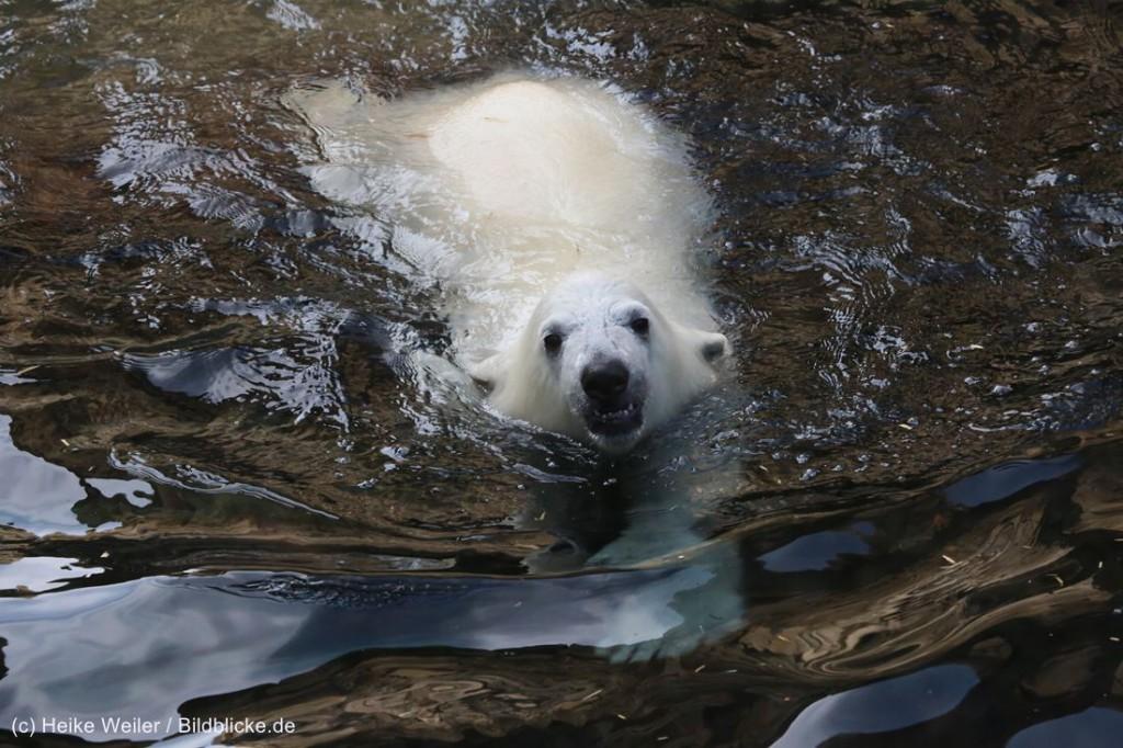 Zoo_Bremerhaven_100516_IMG_3372-1024x682.jpg